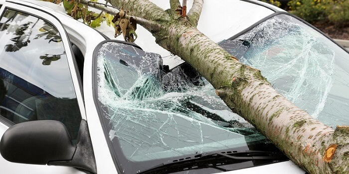 Autoschade door vallende boom